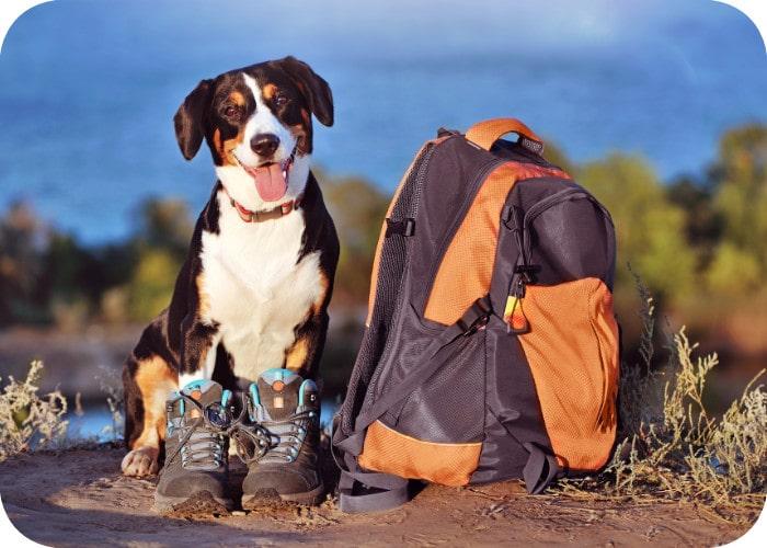 Hond met reistas